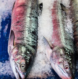 在冰的两条三文鱼 免版税库存图片