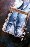 在冰的两条新鲜的Loup de mer鱼 库存图片