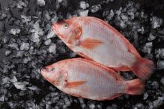 在冰的两条未加工的红色罗非鱼鱼 库存图片