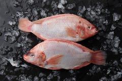 在冰的两条未加工的红色罗非鱼鱼 库存照片