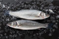 在冰的两条红色雪鱼鱼 免版税库存照片