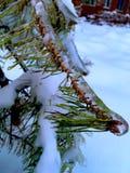 在冰的云杉 库存照片