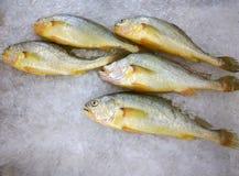 在冰的五条鱼 免版税图库摄影