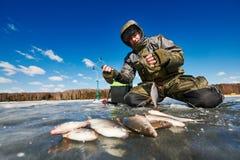 在冰的冬天捕鱼 蟑螂鱼捕获在渔夫或钓鱼者手上 库存图片