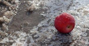 在冰的冷冻苹果 免版税库存照片