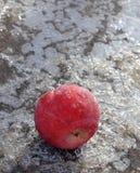 在冰的冷冻苹果 免版税库存图片