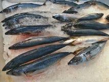在冰的冻Saba鱼 免版税图库摄影