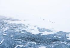 在冰的动物脚印 免版税库存图片
