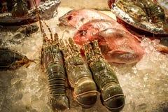 在冰的可口集合海鲜在餐馆 免版税库存图片