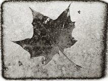 在冰的叶子 库存图片