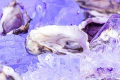在冰的大牡蛎 免版税库存图片
