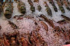 在冰的大虾 库存照片