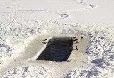 在冰的孔冬天游泳的 免版税库存照片
