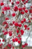 在冰的山楂树莓果 免版税图库摄影