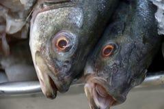在冰的整个梭子鱼在鱼市上 库存图片