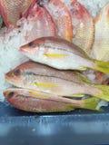 在冰的新近地被抓的红鲷鱼鱼 免版税库存照片