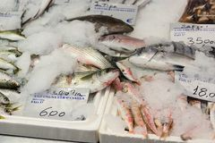 在冰的新近地被抓的鱼待售在希腊鱼市上 库存照片