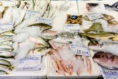 在冰的新近地被抓的鱼待售在希腊鱼市上 免版税库存图片