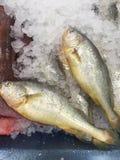 在冰的新近地被抓的鱼 库存图片