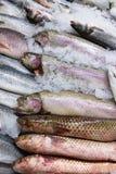 在冰的新鲜的俄国鱼在食品市场16上 图库摄影
