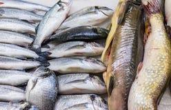 在冰的新鲜的俄国鱼在食品市场14上 免版税库存照片