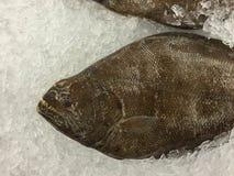 在冰的新鲜的大比目鱼鱼 图库摄影