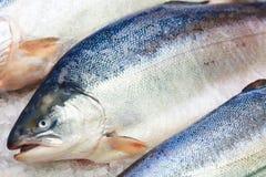 在冰的新鲜的挪威三文鱼在超级市场 免版税库存照片