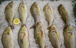 在冰的新鲜的海鱼与柠檬裁减 晚餐的美国红鱼或红大马哈鱼抓住 库存图片
