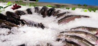 在冰的新鲜的海鱼鳟鱼 免版税图库摄影