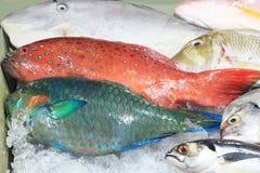 在冰的新鲜的热带鱼 库存照片