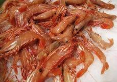 在冰的新鲜的煮熟的虾 图库摄影