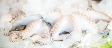 在冰的新鲜的章鱼 免版税库存照片