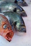 在冰的新鲜的红鲻鱼和岩石鱼 免版税库存图片