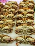 在冰的新鲜的螃蟹 免版税库存图片