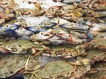 在冰的新鲜的螃蟹 免版税图库摄影
