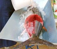 在冰的新鲜的金枪鱼 图库摄影