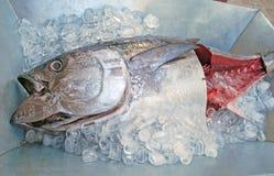 在冰的新鲜的金枪鱼 库存照片