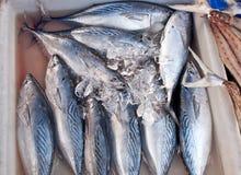 在冰的新鲜的鲭鱼在鱼市上 免版税库存照片