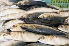 在冰的新鲜的鲭鱼鱼在市场上 免版税库存照片