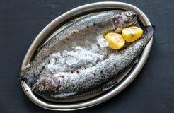 在冰的新鲜的鳟鱼在葡萄酒金属化盘子 免版税库存图片