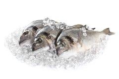 在冰的新鲜的dorado 免版税库存图片