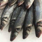 在冰的未加工的鳟鱼 库存照片