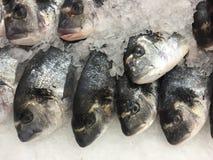 在冰的未加工的鳟鱼 库存图片