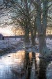 在冰的树反射 免版税库存照片