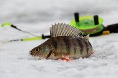 在冰的栖息处 库存照片