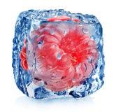 在冰的桃红色莓 库存图片
