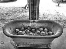 在冰的椰子 免版税库存图片