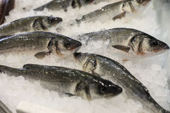 在冰的欧洲雪鱼在鱼购物待售 免版税库存图片