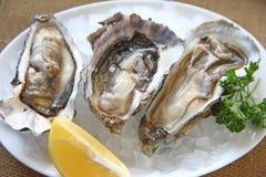 在冰的牡蛎 免版税库存图片