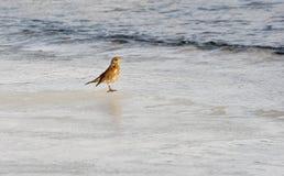 在冰的狂放的鸟冬天 免版税库存照片